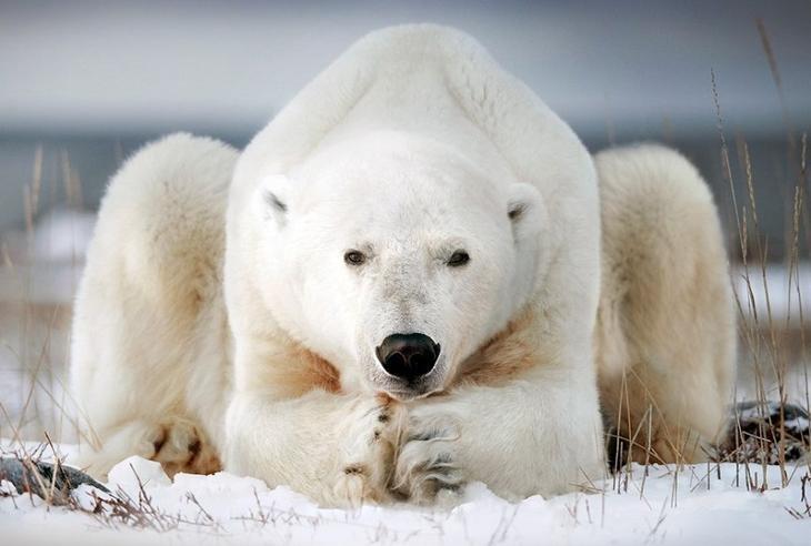 Уроки йоги от медведей