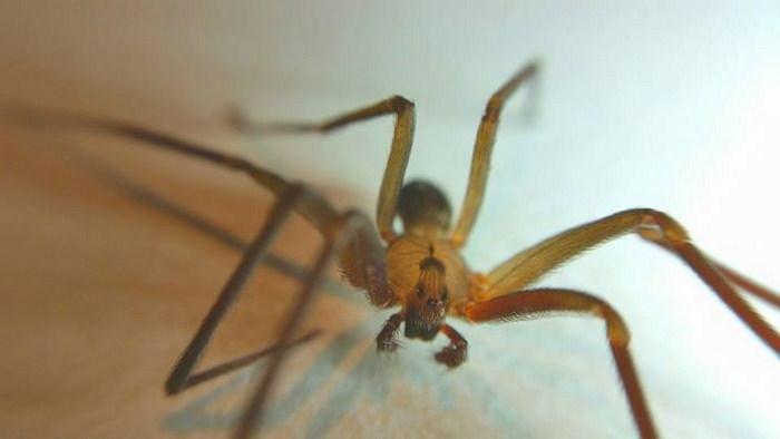 паук ползет к дверям есть термобельем для