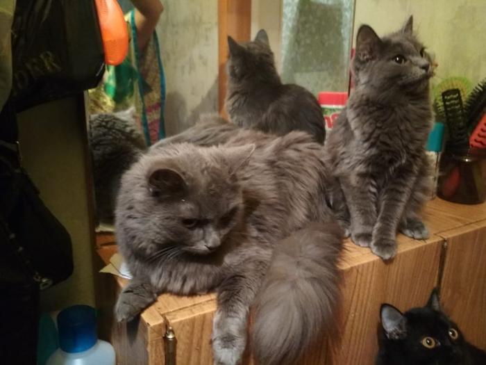Сотрудница ЖКХ пришла заколачивать подвалы, где жили симпатичные котята