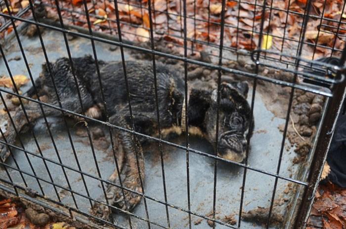 Невероятная история спасения. Люди говорили: «Эта собака — обречена…» Но нашелся человек, который поверил в нее…