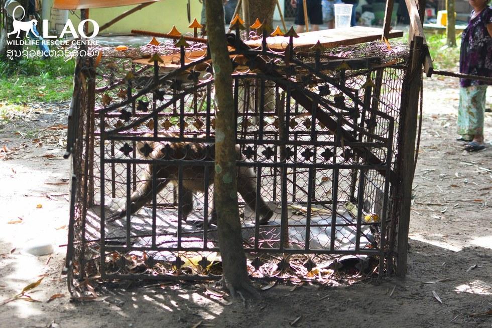 Обезьяну содержали в клетке 12 лет.
