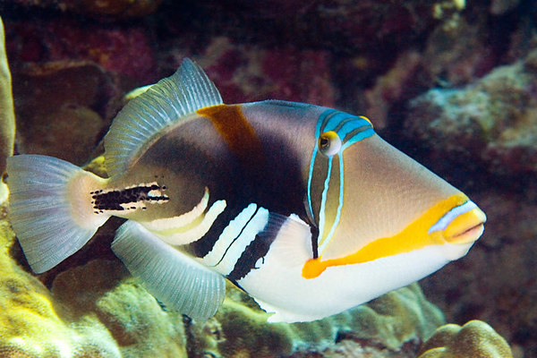 Спинороги: морское чудо с шипами