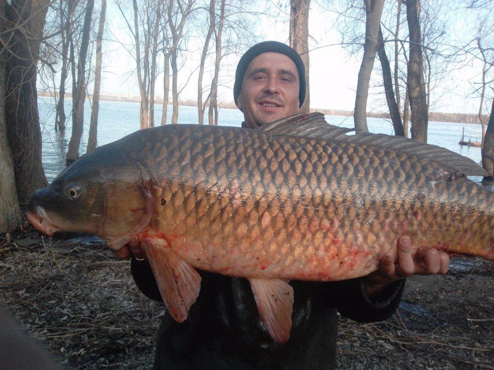 рыбалка сазан обь