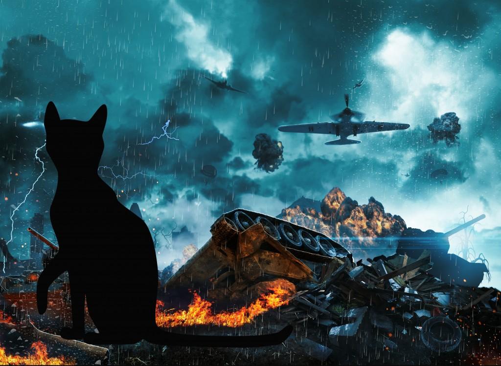 Котёнок Рыжик стал радаром