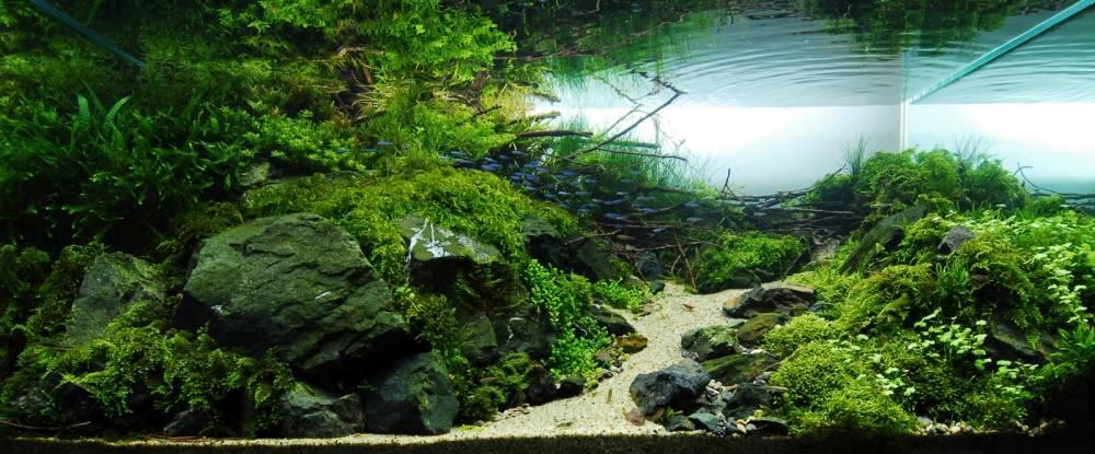 Фото-примеры оформления аквариумов
