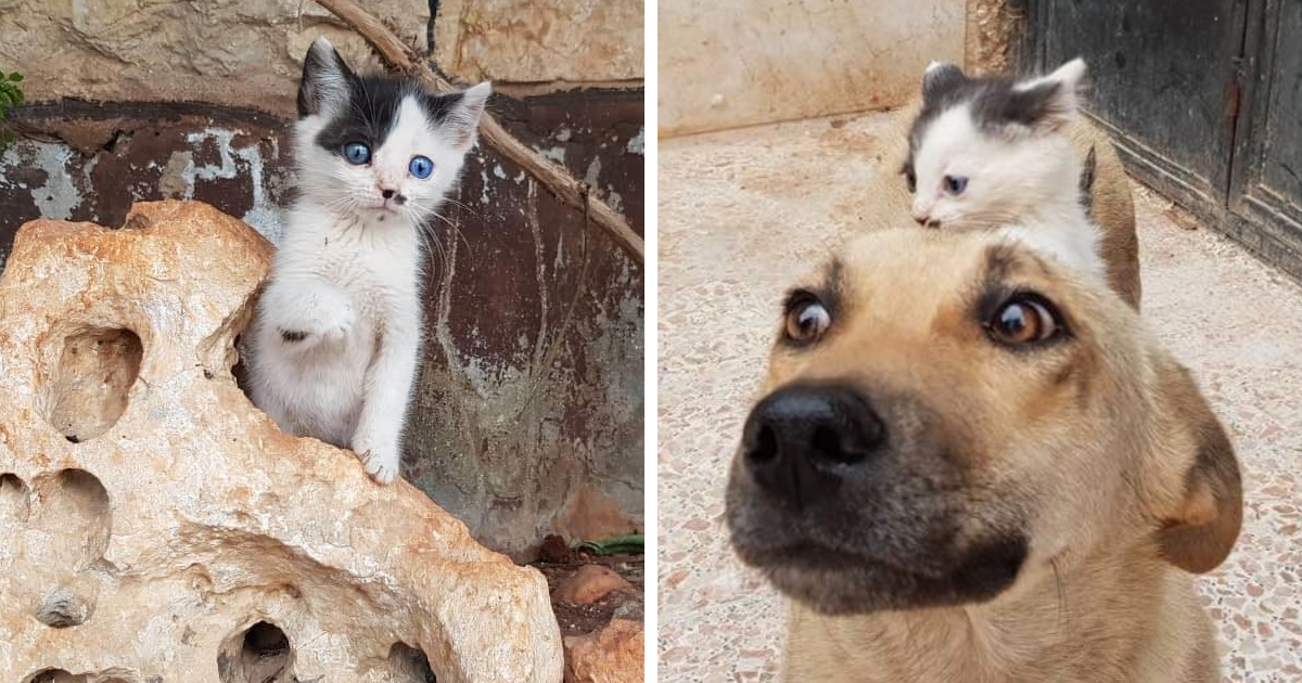 This Orphan Kitty Walked Up To A Dog Who Lost Her Puppies And Convinced The Doggy To Become Her Mom