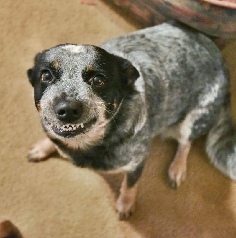 Мимика помогла собакам общаться с людьми