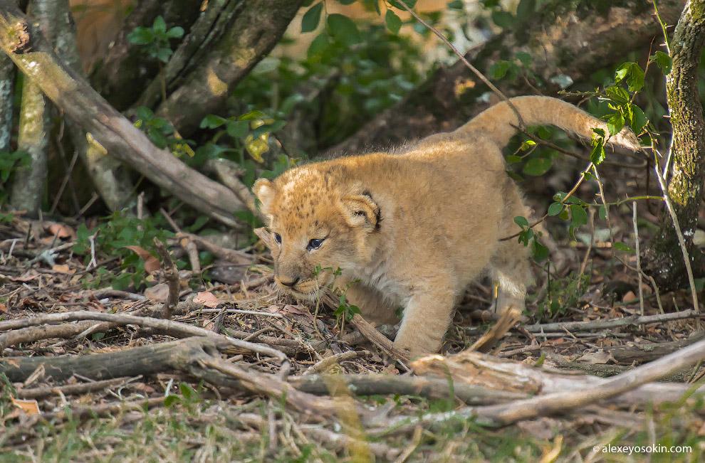 Международный день львов