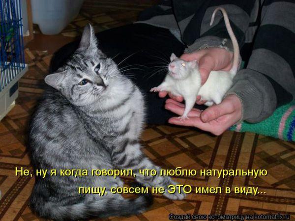 """Весёлая """"котоматрица"""""""