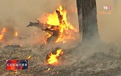 В Ростовской области объявлен режим ЧС из-за пожаров