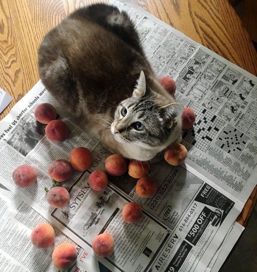 Люди взяли кота из приюта… Но они не ожидали от питомца такого странного поведения!