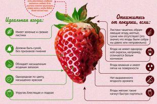 Как выбирать клубнику? Инфографика