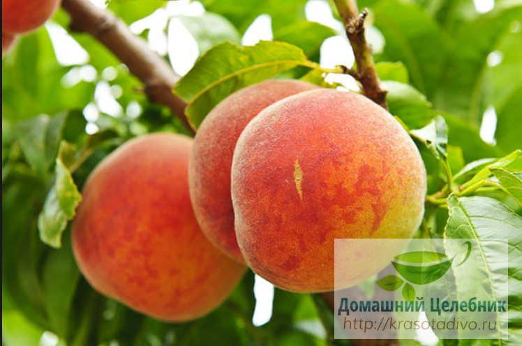 Персик задерживает старение …