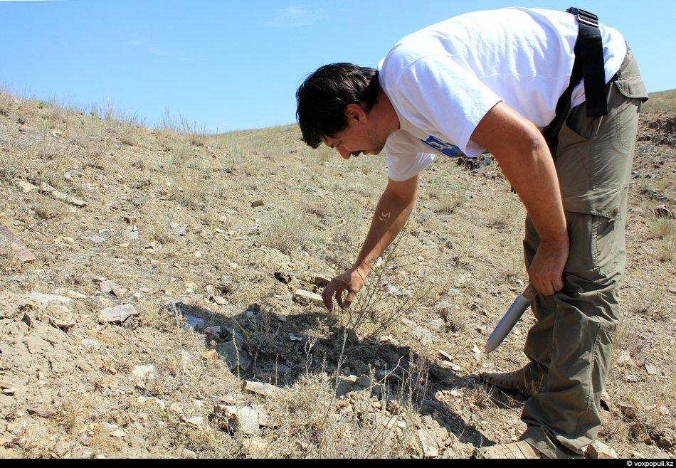 В Казахстане каракурт обитает в степях,