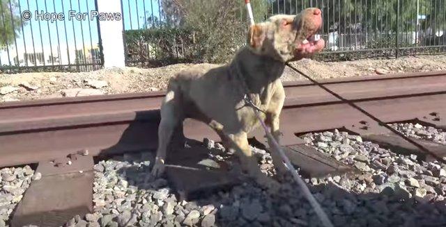 Собаку кто-то бросил прямо возле железнодорожных путей