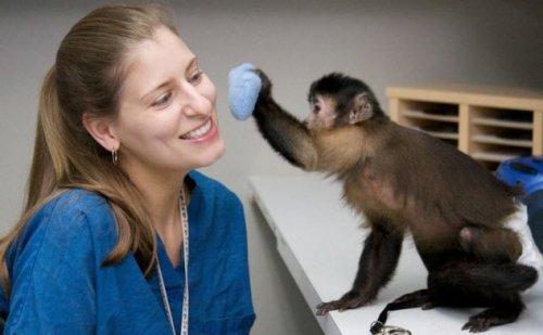 Странные животные - помощники, которых вы не каждый день встретите