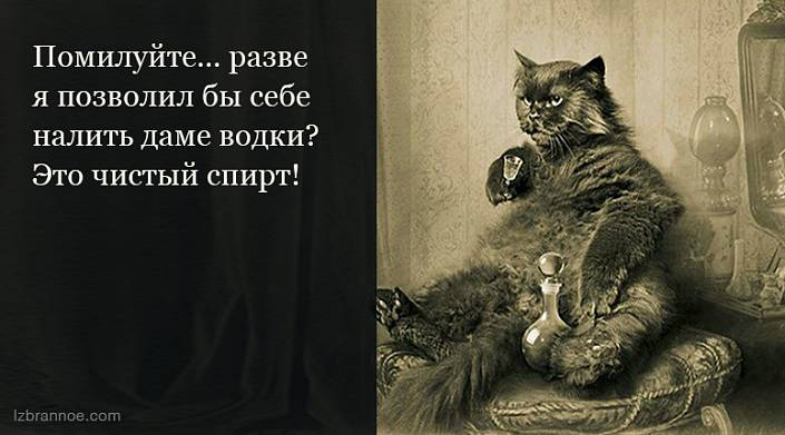 15 цитат, за которые мы обожаем Михаила Булгакова