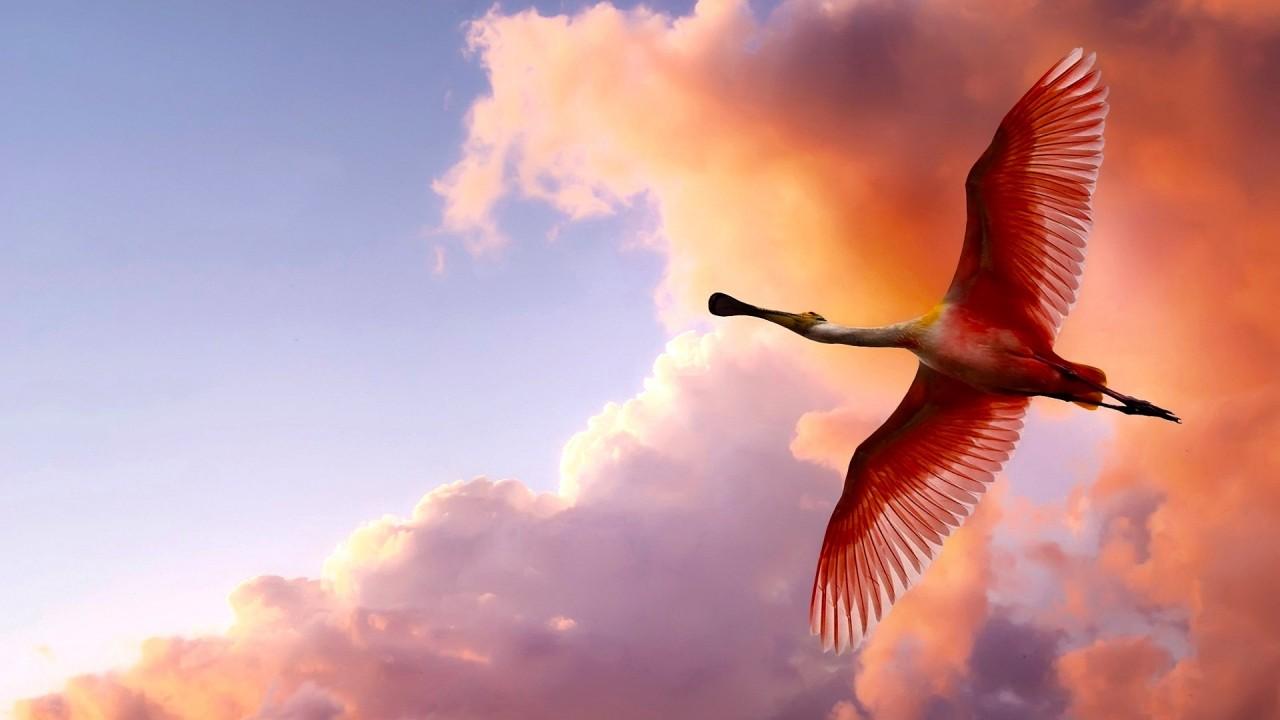 Почему не все птицы летают?