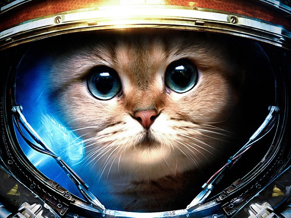 Интересные факты о животных в космосе