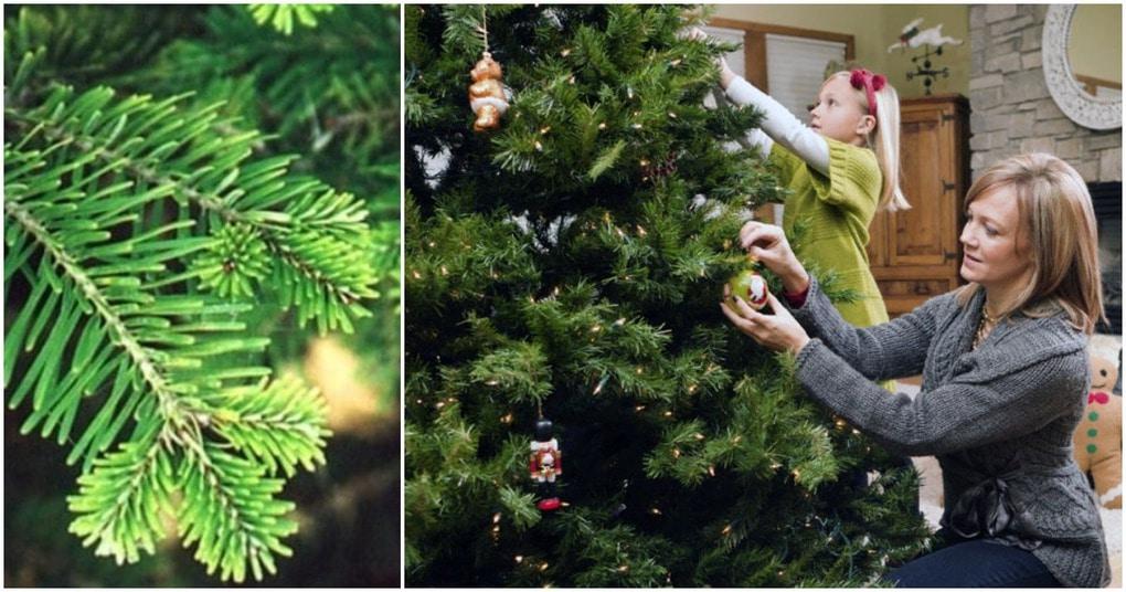 Полезные советы: как сохранить живую елку в течении новогодних праздников