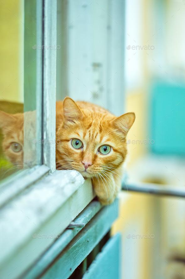 История про чужие волосы, золотой перстень и рыжего кота на подоконнике