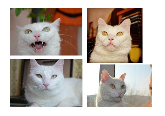Как коты заранее чувствуют приход хозяев?