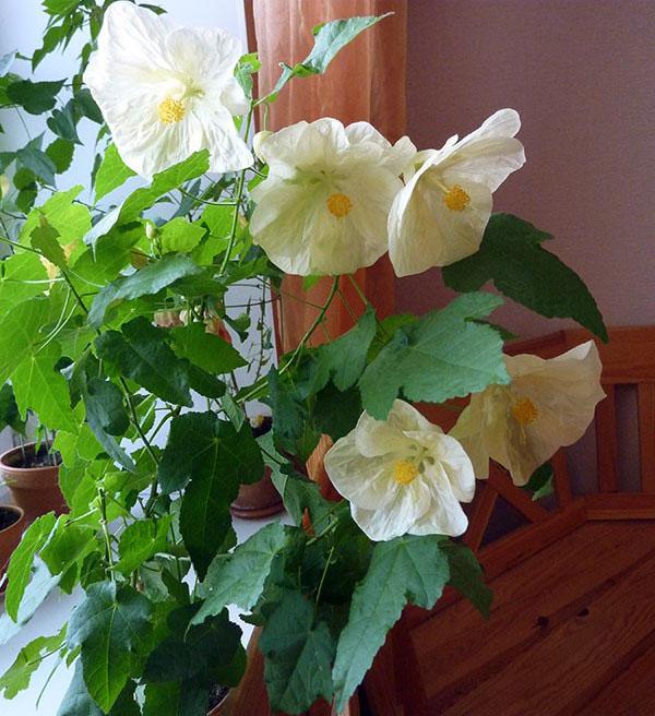 знакомство детей с комнатными цветами