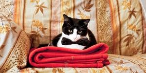Как привести дом в порядок? Кошка!