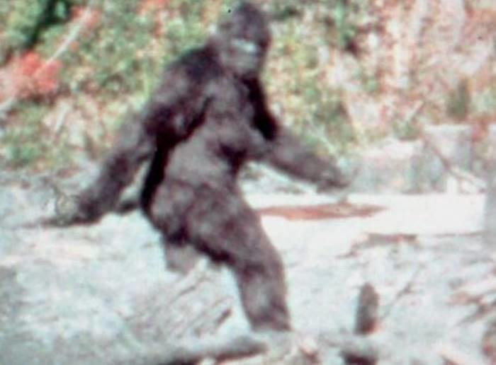 И хотя учёные впервые попытались проанализировать предполагаемую ДНК йети, это не первый случай, когда легендарное существо связывали с медведями анализ, днк, йети, медведь, наука, новости, тайна, ученные