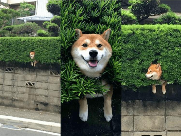 16 Фотографий, Которые Доказывают, Что Жизнь С Собаками Прекрасна