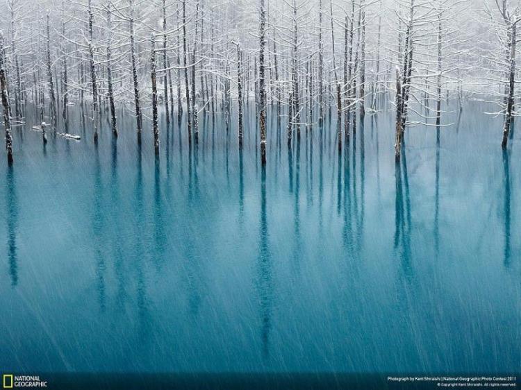 Лучшие фото года по версии National Geographic  (11 фотографий)