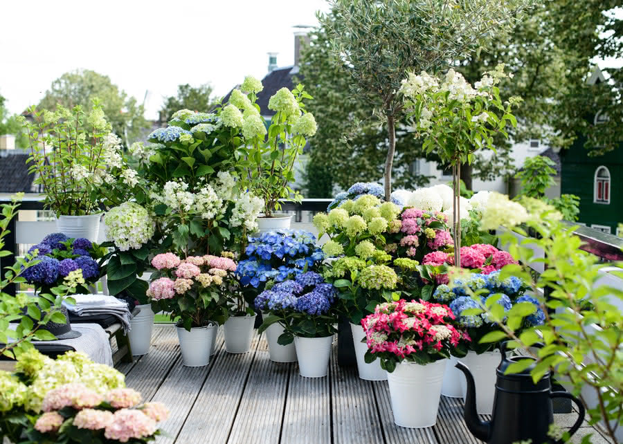 Создайте сад на балконе