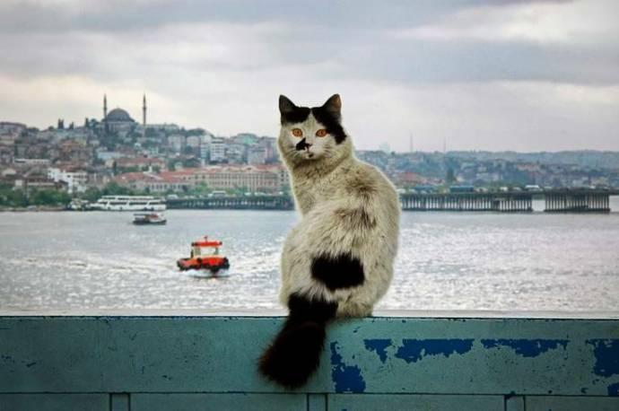 Коты Босфора
