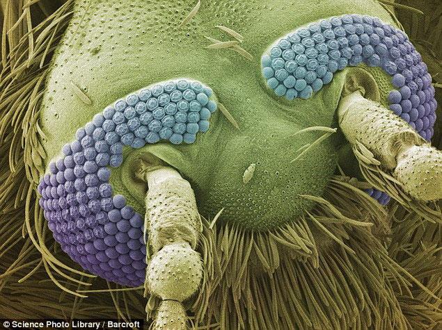 Красота под микроскопом
