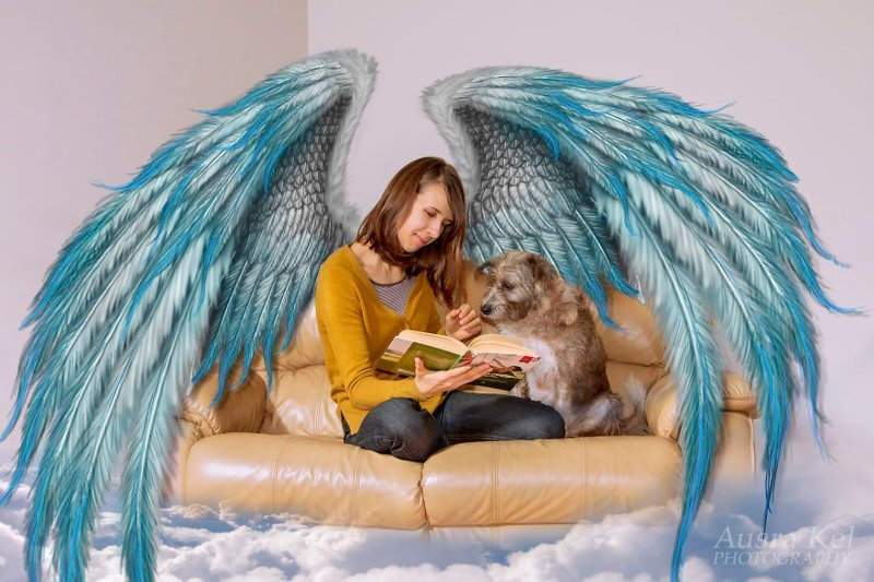 Собаки из приюта и их новый мир