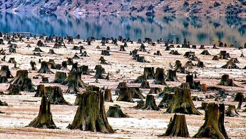 Захват кругляка: Правда ли, что Китай лишает нас леса?