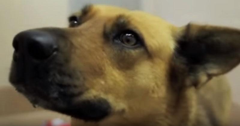 Собака наконец-то нашла своего нового хозяина. Вы не останетесь равнодушными, увидев ее реакцию!