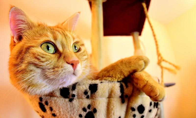 Кот, который спас своего хоз…