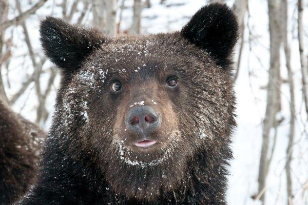 Медведь устроил гонки на автотрассе в Сочи