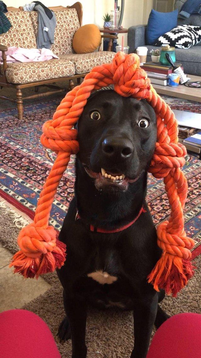 20 милых собачьих чудачеств,…