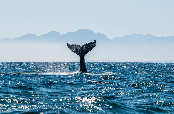 Исследование показало, что римляне охотились на китов