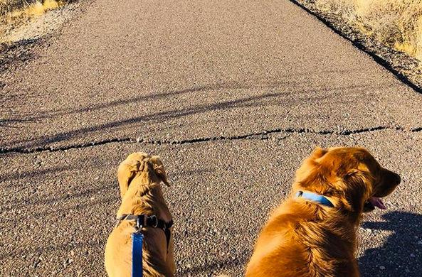 Пес спас свою хозяйку от нападения змеи