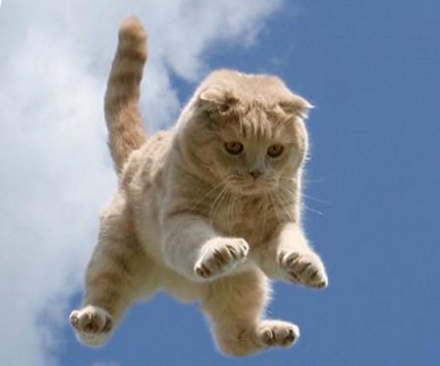 Смешной до боли рассказ про полёт кота Барсика