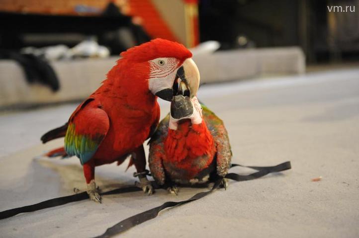 ОФОРМИТЬ_Одним - голос, другим - красота: чем наградила природа птиц