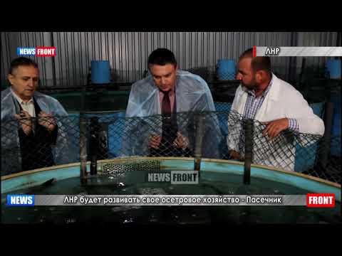 ЛНР будет развивать свое осетровое хозяйство — Пасечник