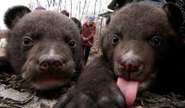Китаец принимал медведей за домашних собак