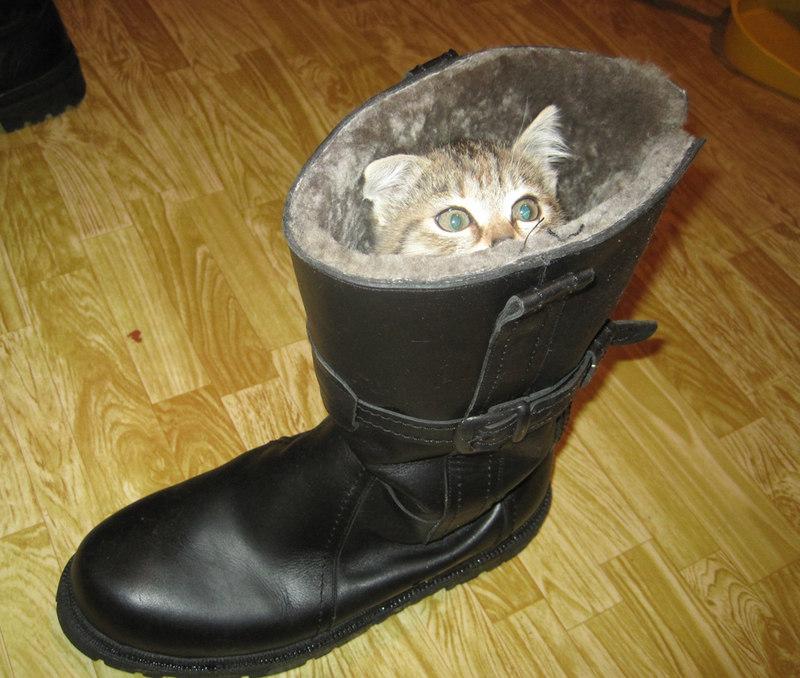 Про кота в сапоге.
