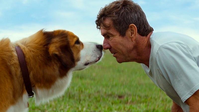 Рейтинг собак по интеллекту: самая точная градация от Стенли Корена