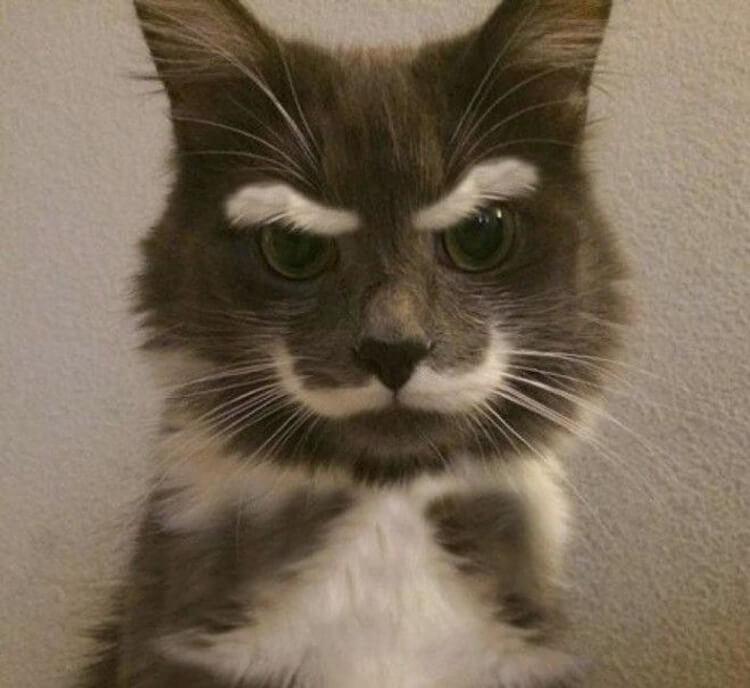 22 кошки, которые имеют самы…
