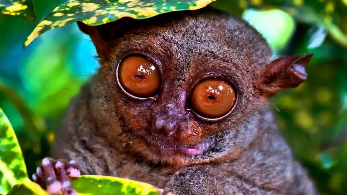 Ничего себе глаза!!! ТОП 5 самых глазастых животных планеты